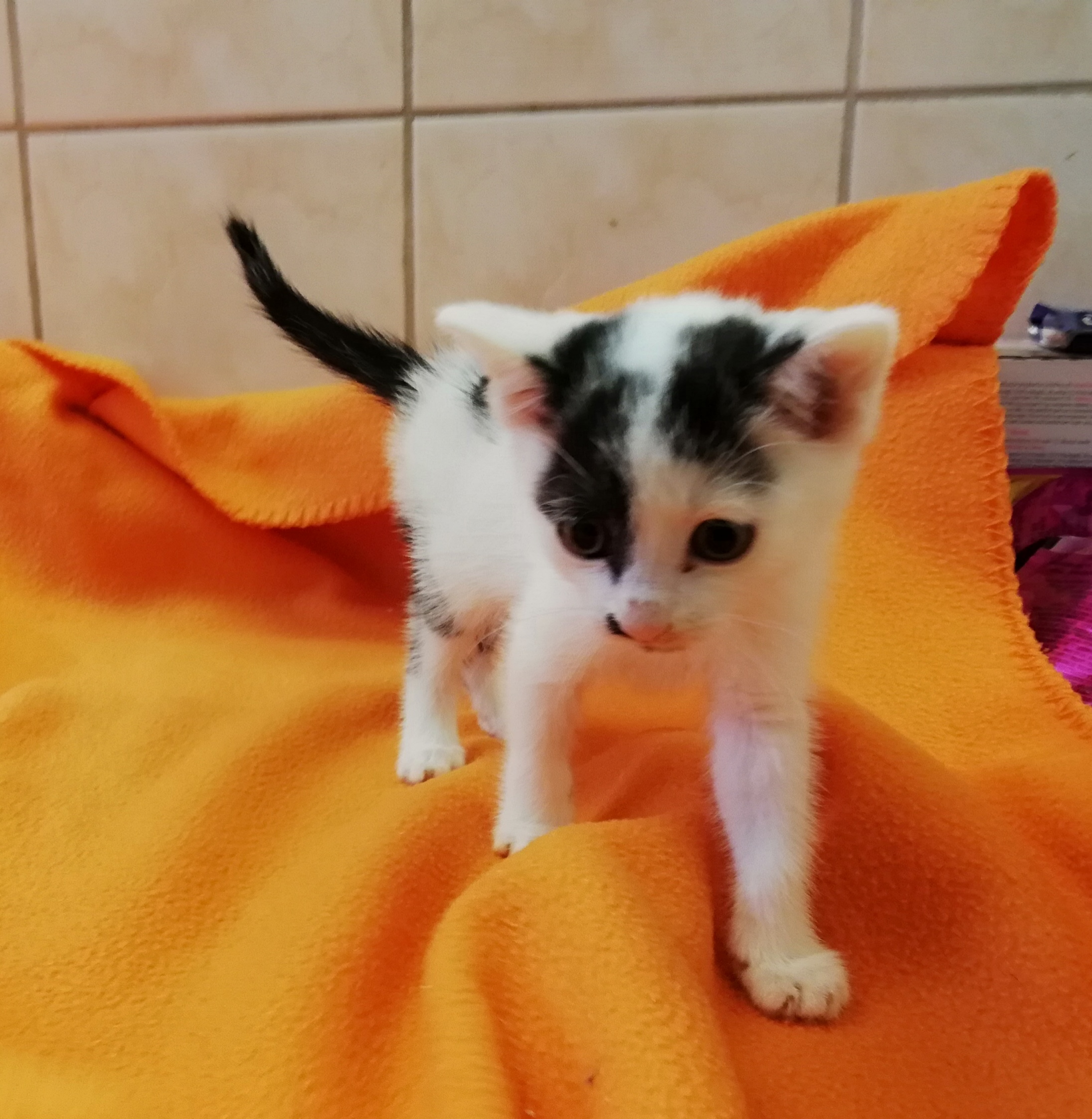 4795 Kobi – do adopcji